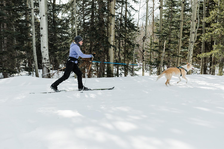 skijouring near denver colorado_013.jpg