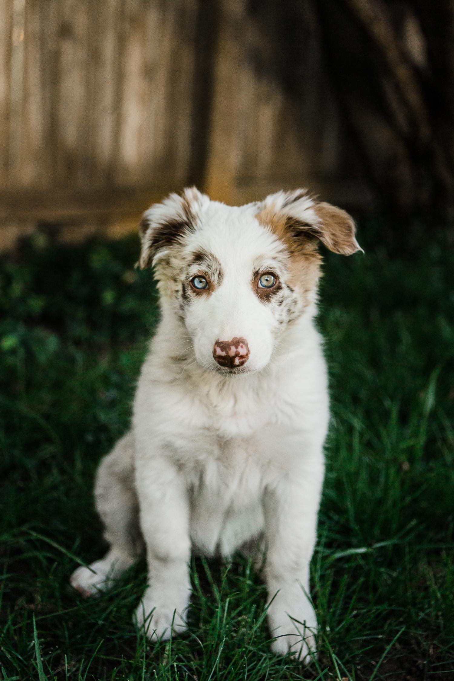 cute puppy photography boulder_002.jpg