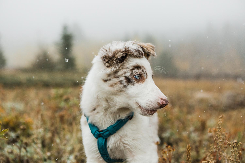 cute puppy photography boulder_004.jpg