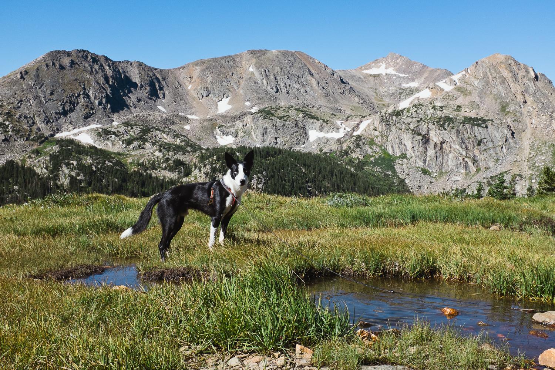 colorado dog hikes_007.jpg