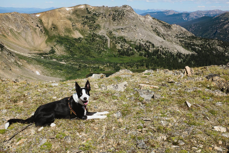 colorado dog hikes_016.jpg