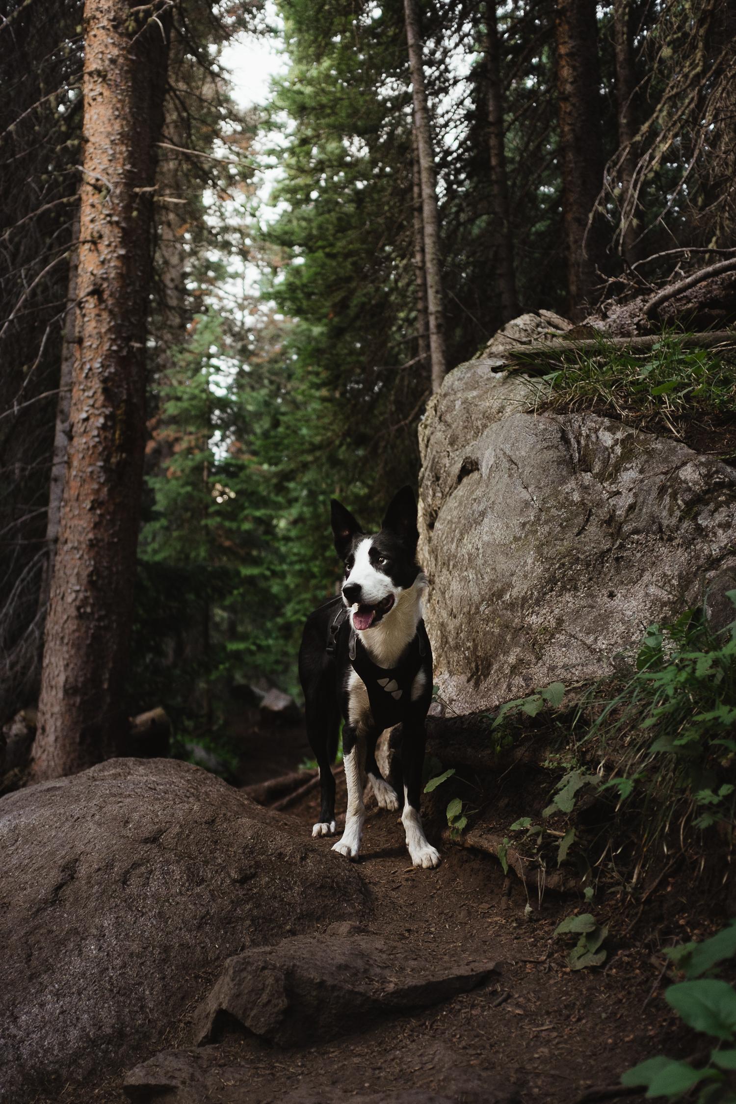 hiking with dogs colorado allison mae_012.jpg