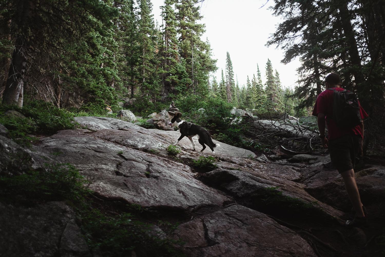 hiking with dogs colorado allison mae_016.jpg