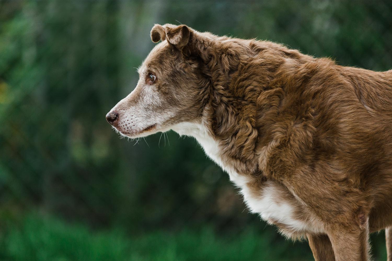 best pet photographers denver_018.jpg