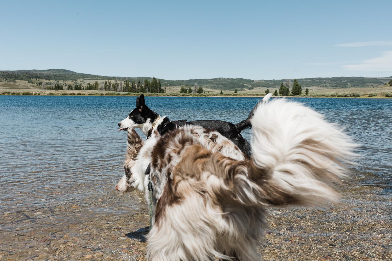 allisonmae dogs bridger wilderness_003.jpg