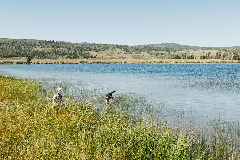 allisonmae dogs bridger wilderness_004.jpg