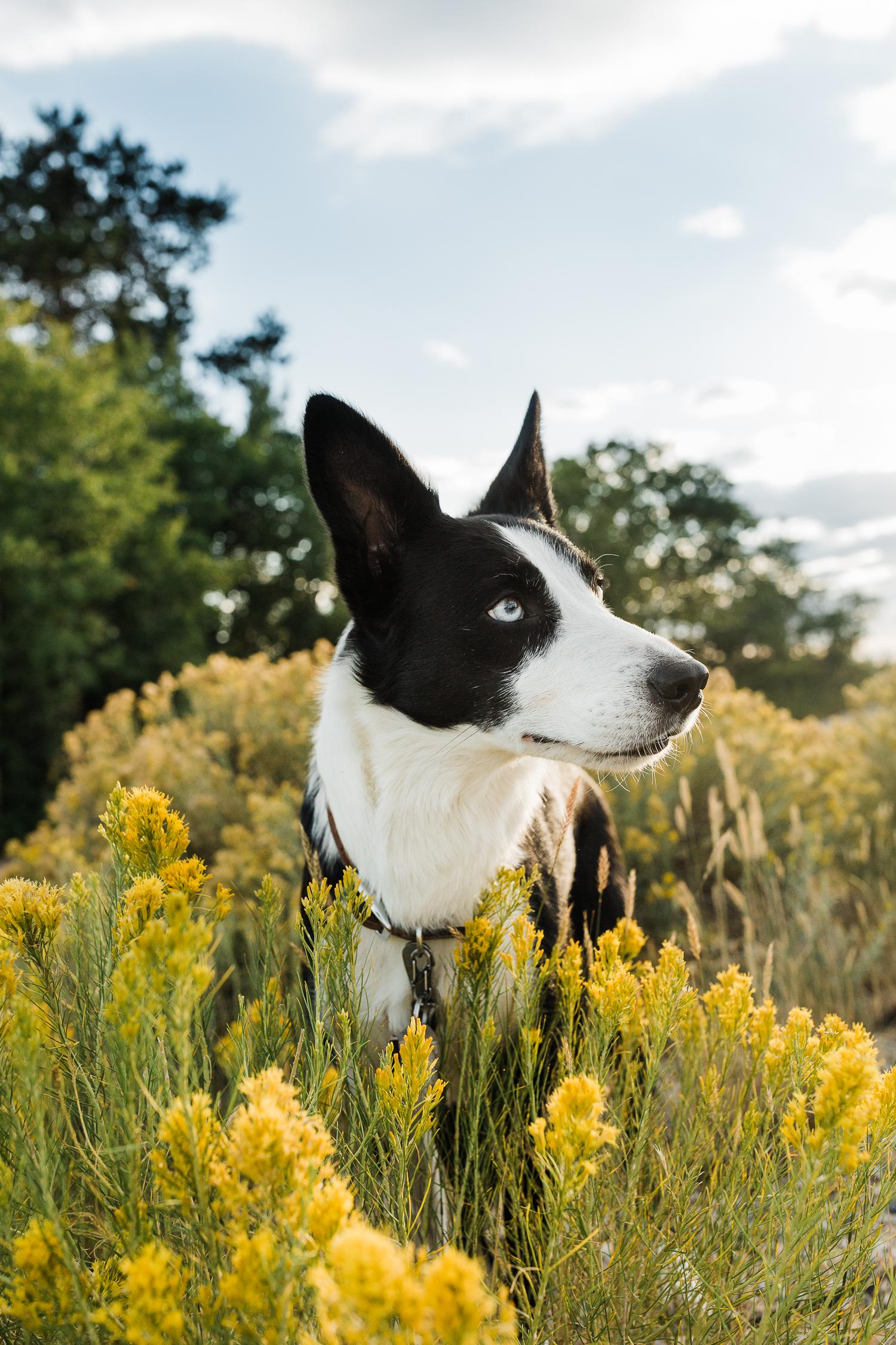 allisonmae dogs bridger wilderness_017.jpg