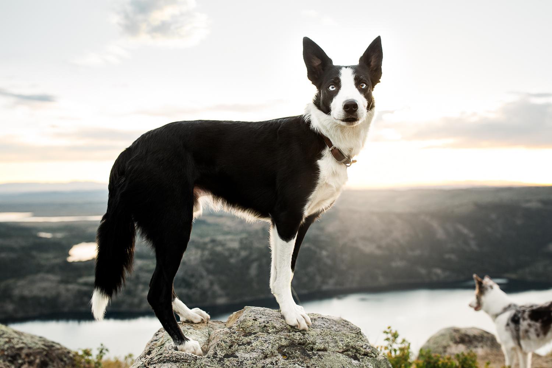 allisonmae dogs bridger wilderness_025.jpg