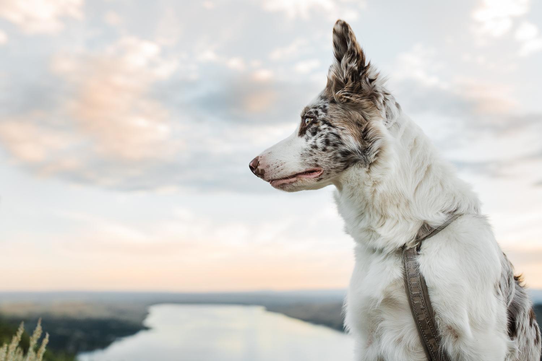 allisonmae dogs bridger wilderness_024.jpg
