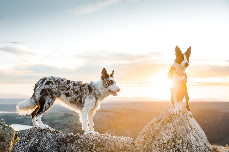 allisonmae dogs bridger wilderness_030.jpg