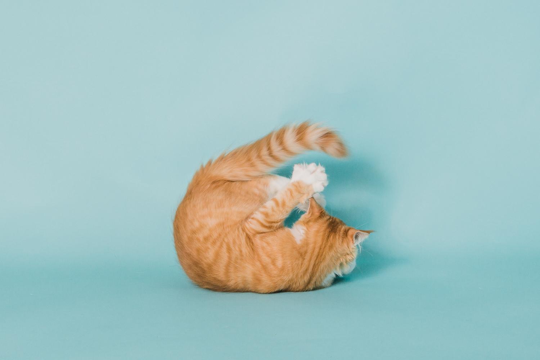 cat photography near boulder co_019.jpg