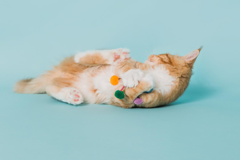cat photography near boulder co_024.jpg