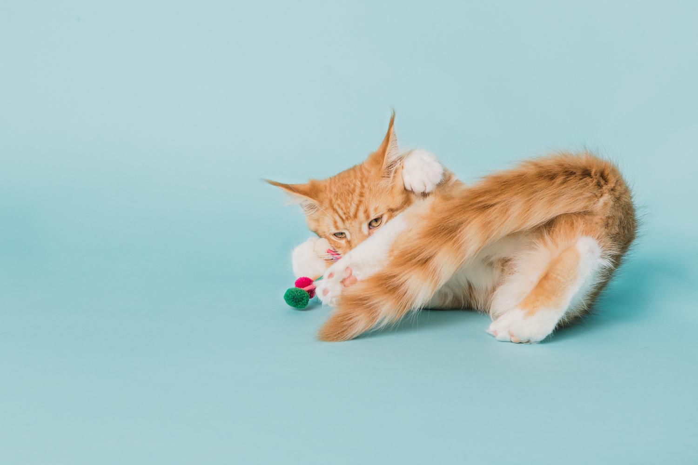 cat photography near boulder co_015.jpg