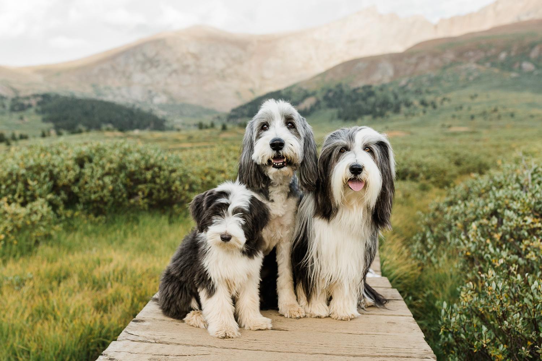 denver mountain dog photos_001.jpg