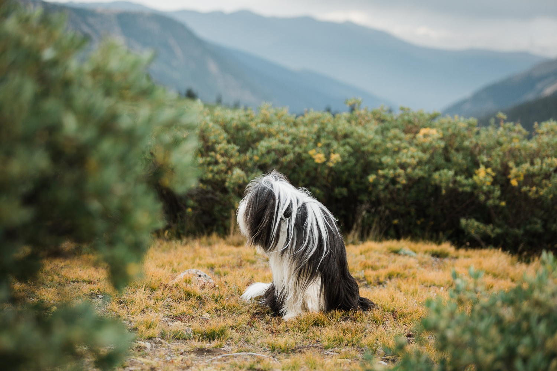 denver mountain dog photos_030.jpg