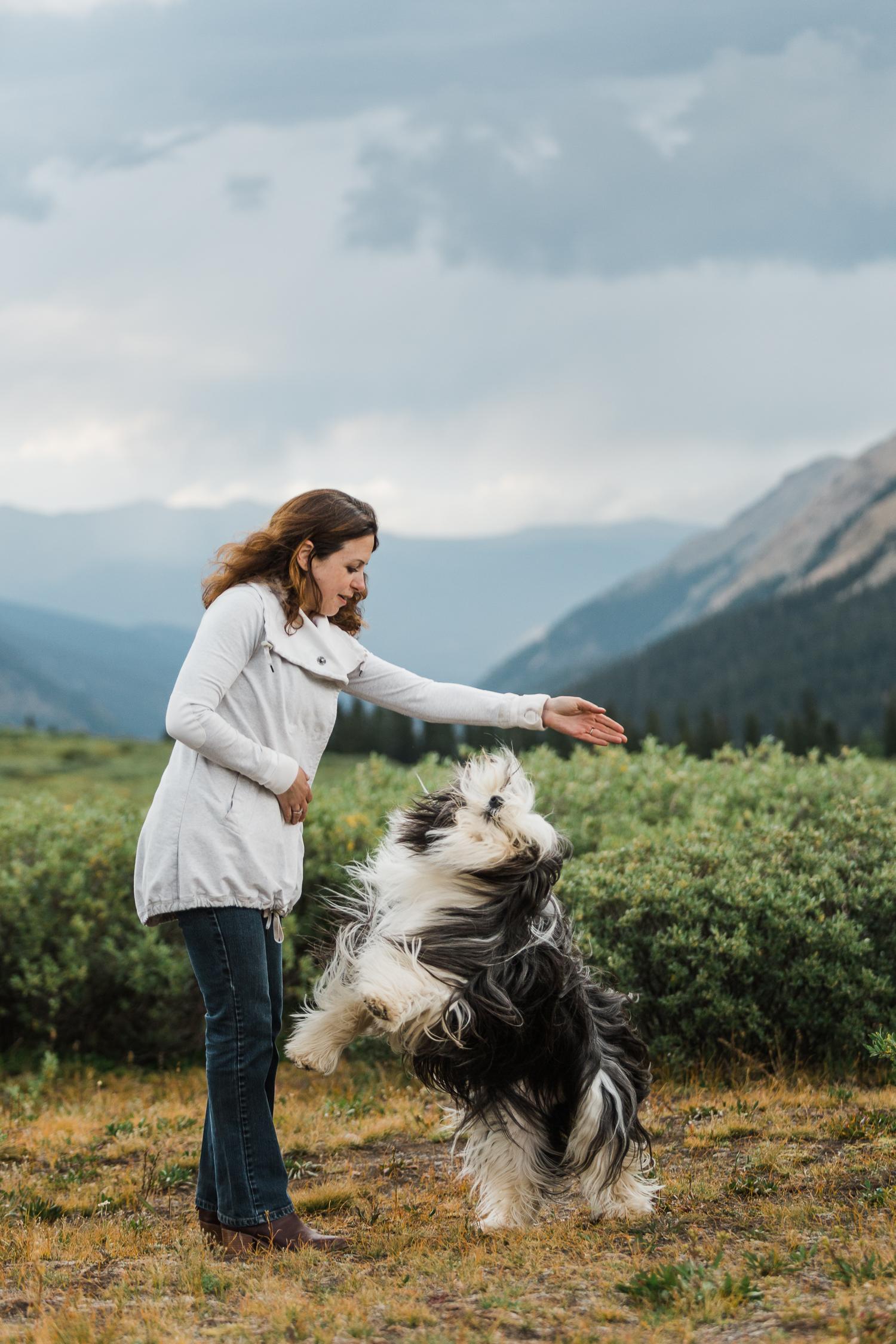 denver mountain dog photos_035.jpg