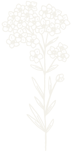 Graphic 4 Snowdrop - Use on Sage Background 300px.png