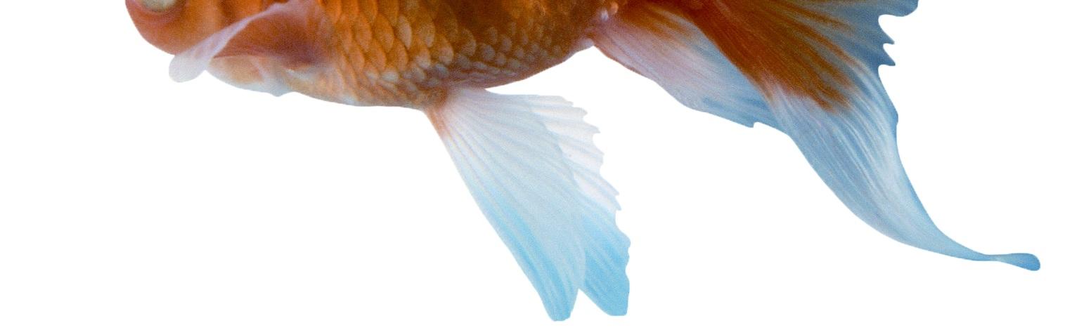 goldfish+shadow.jpg