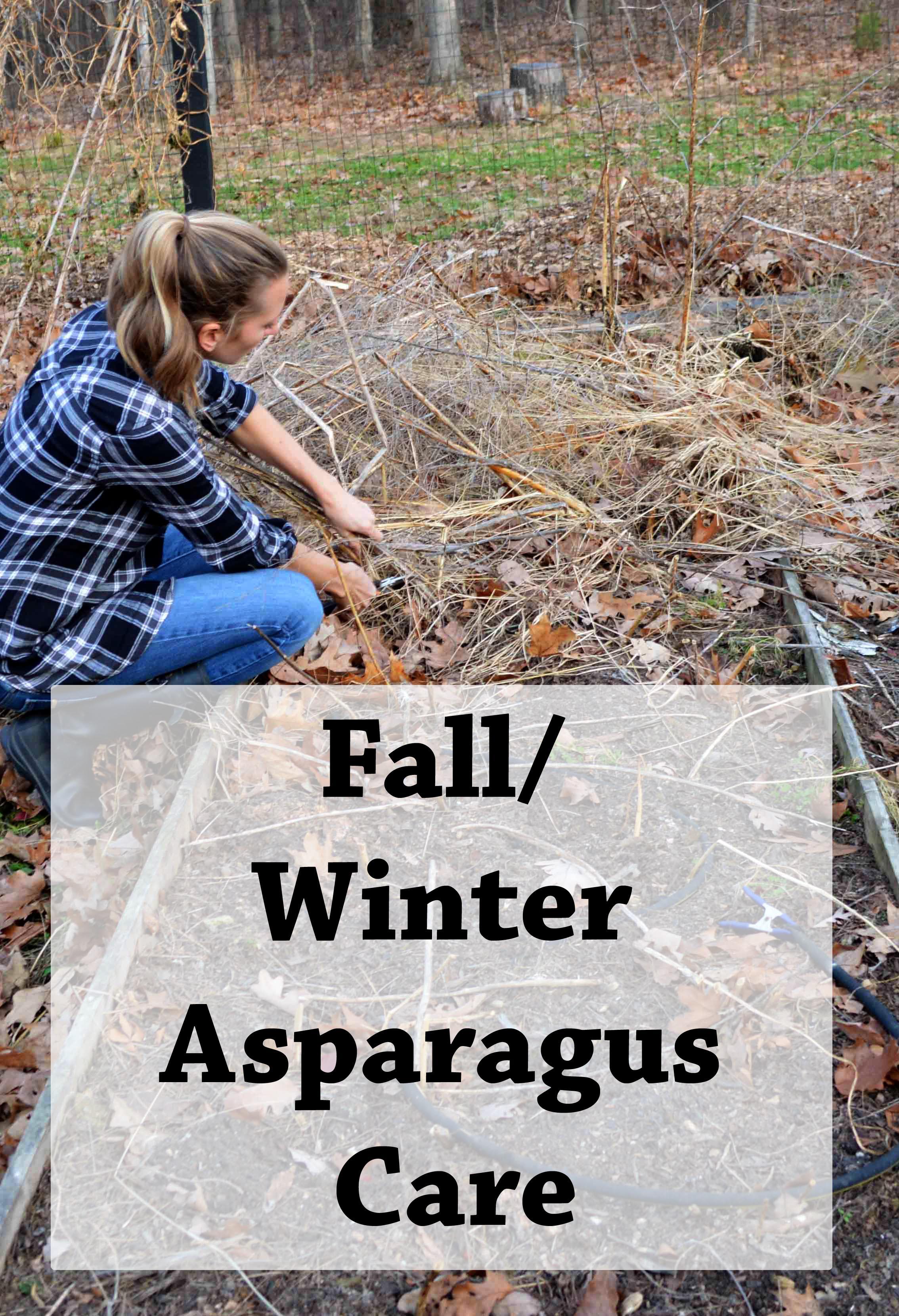 Fall Winter Asparagus Care.jpg