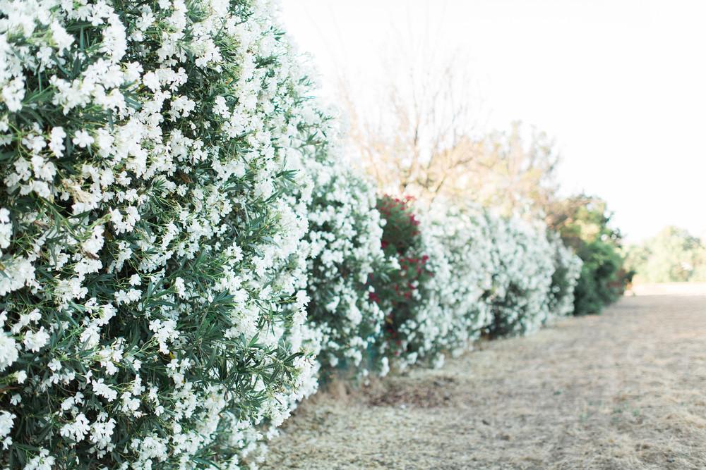 Wall+of+Flowers+Honeysuckle.jpgWall+of+Flowers+Honeysuckle.jpeg