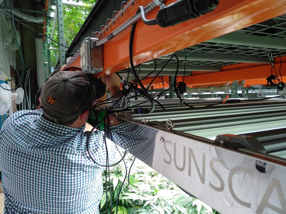 Justin Hanging LightsCR.jpg