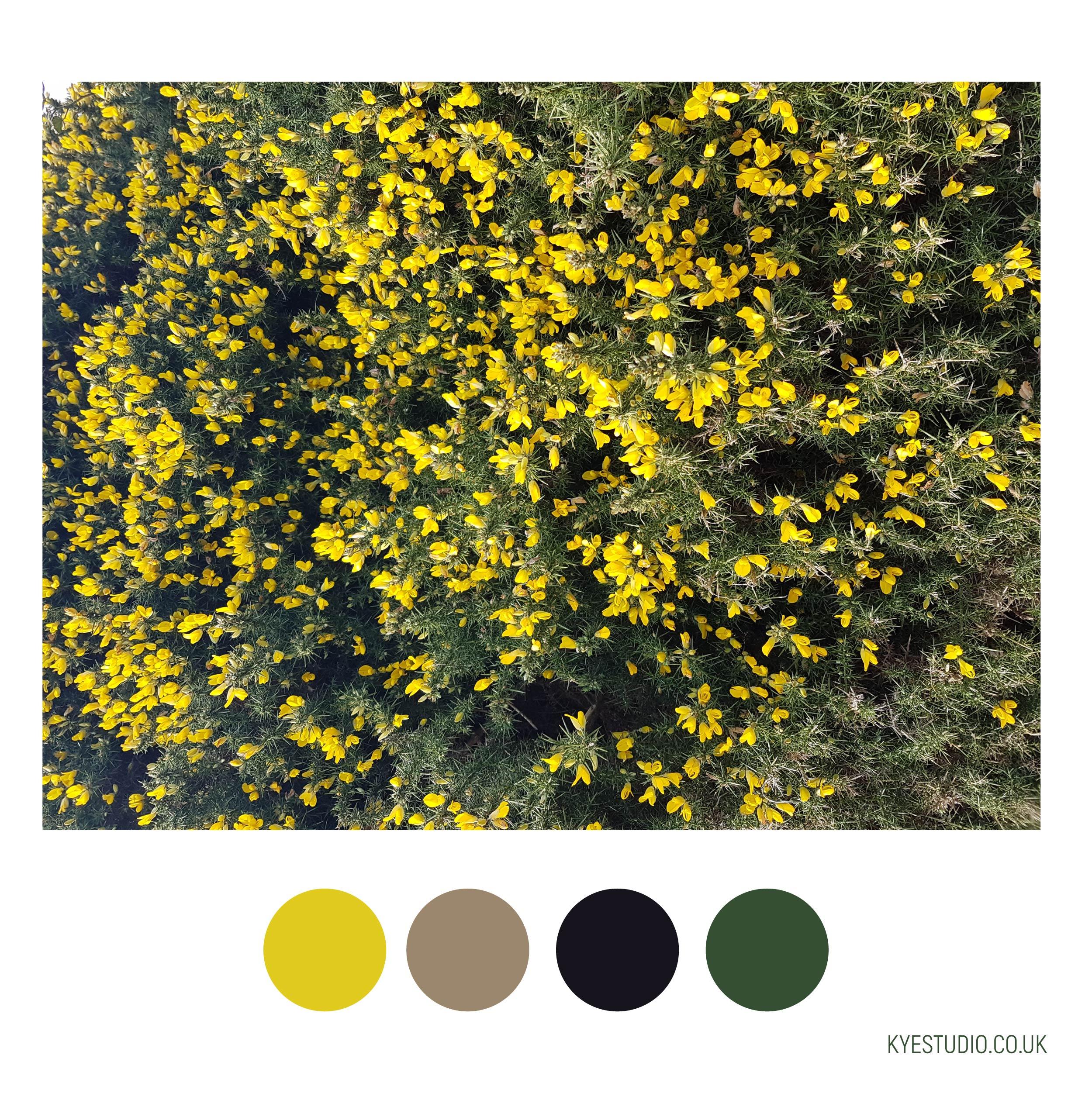 KYE_Cornish_Colours3.jpg