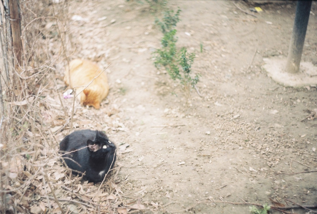 mirela-petre -braila-pisici.jpg