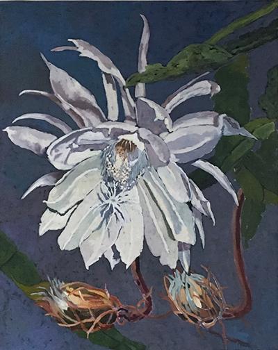 Night Blooming Cerius.jpg