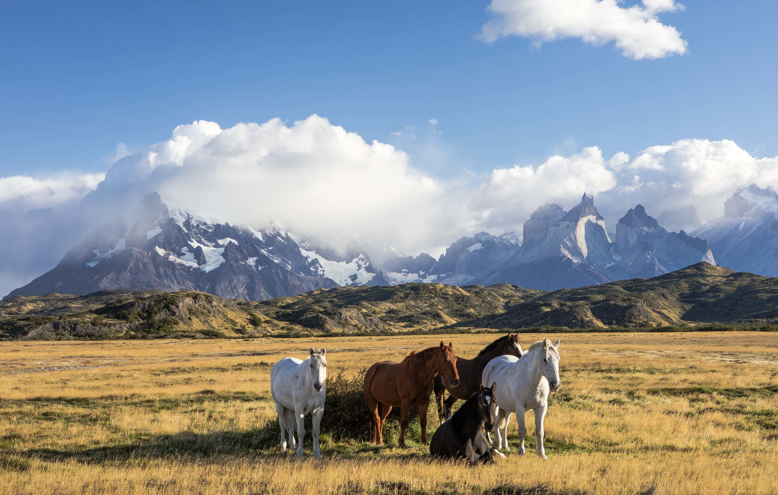 Stallions of Patagonia