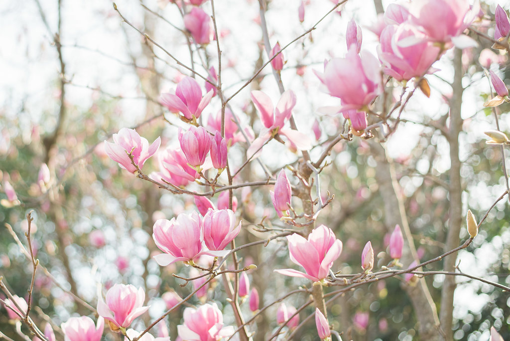 Crystal-Neal-Spring-Dallas-Arboretum-Engagement-Gray-Door-Photography16.jpg
