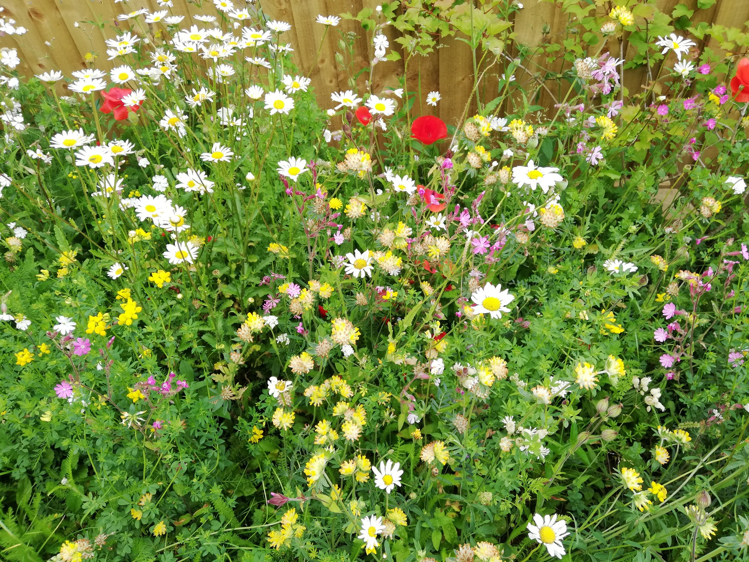 wildflowers at St Swithuns.jpg