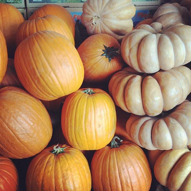 pumpkins & butternut squash
