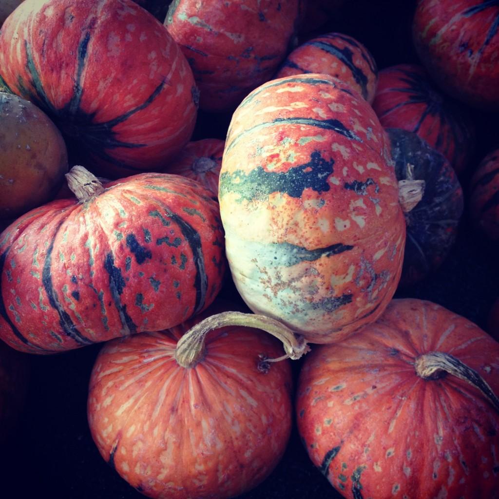 HarvestPumpkinSquash1-1024x1024.jpg