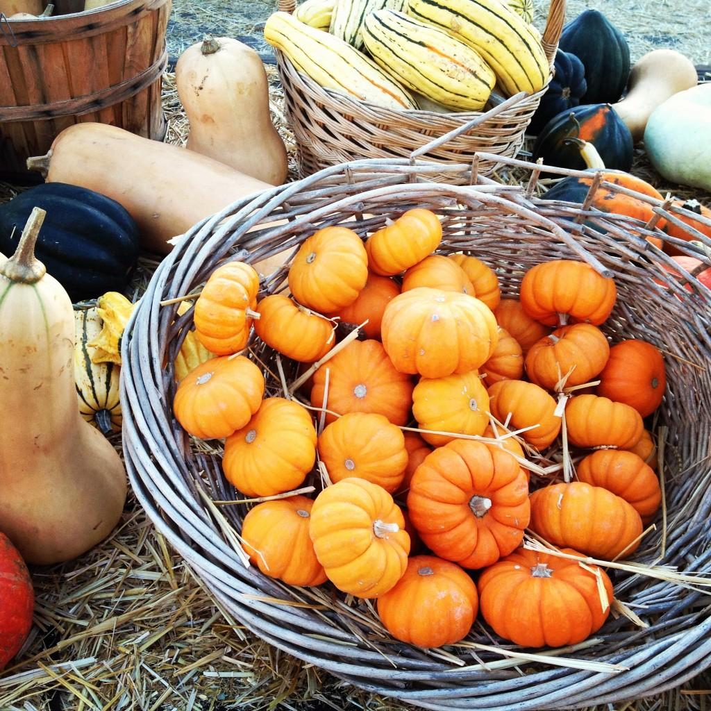 HarvestPumpkinsBasket-1024x1024.jpg