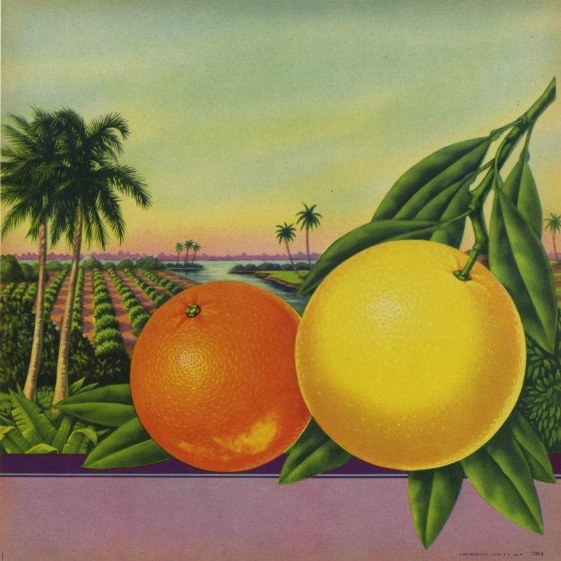 orangeCA1