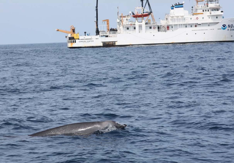 Leg2_12Aug_whale-gunter.jpg