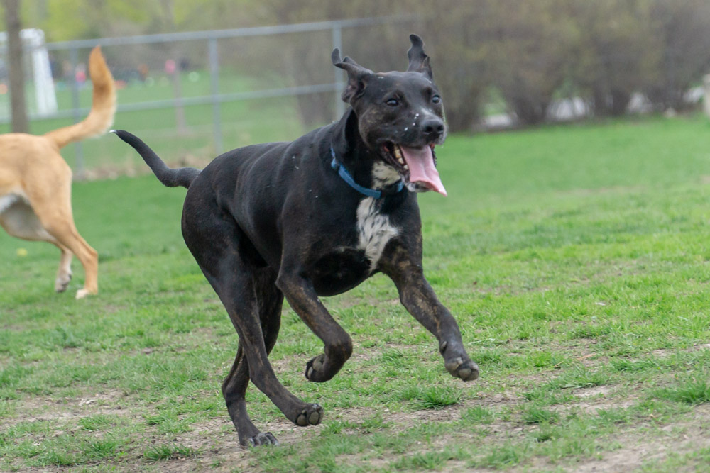 Happy prancing dog
