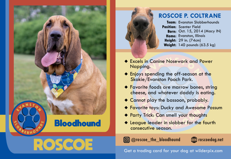 Roscoe2019h.png