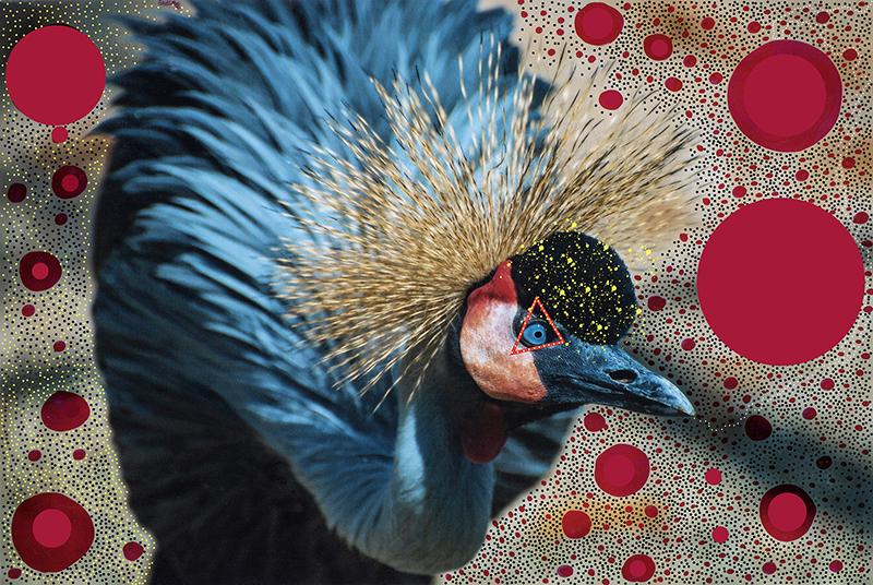 Techo birds3.jpg