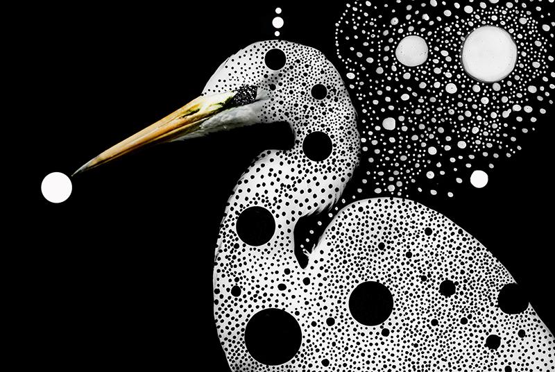 Techo birds4.jpg