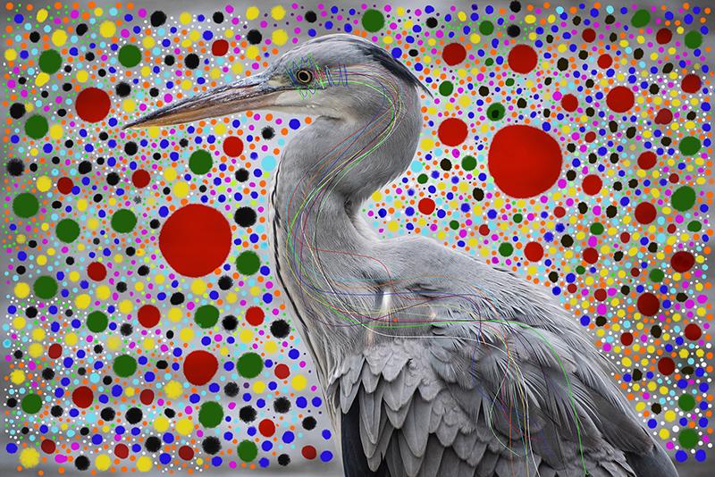 Techo birds5.jpg