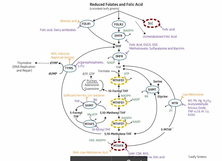 Behold! The Methylation cycle.