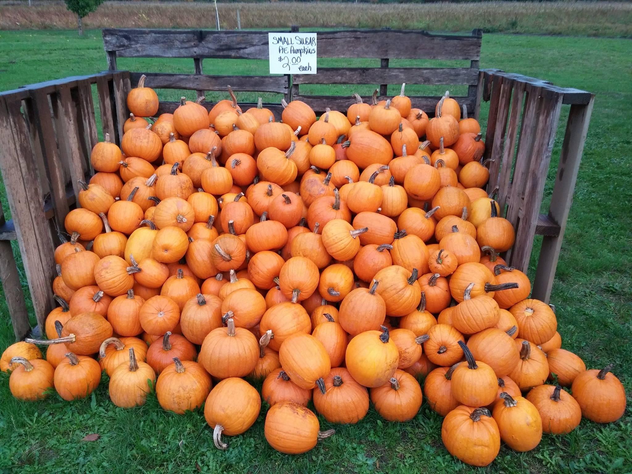 Pumpkins from Pruitt's Farm.