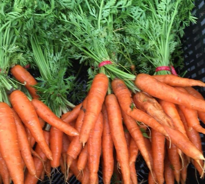 Carrots+%282%29.jpg