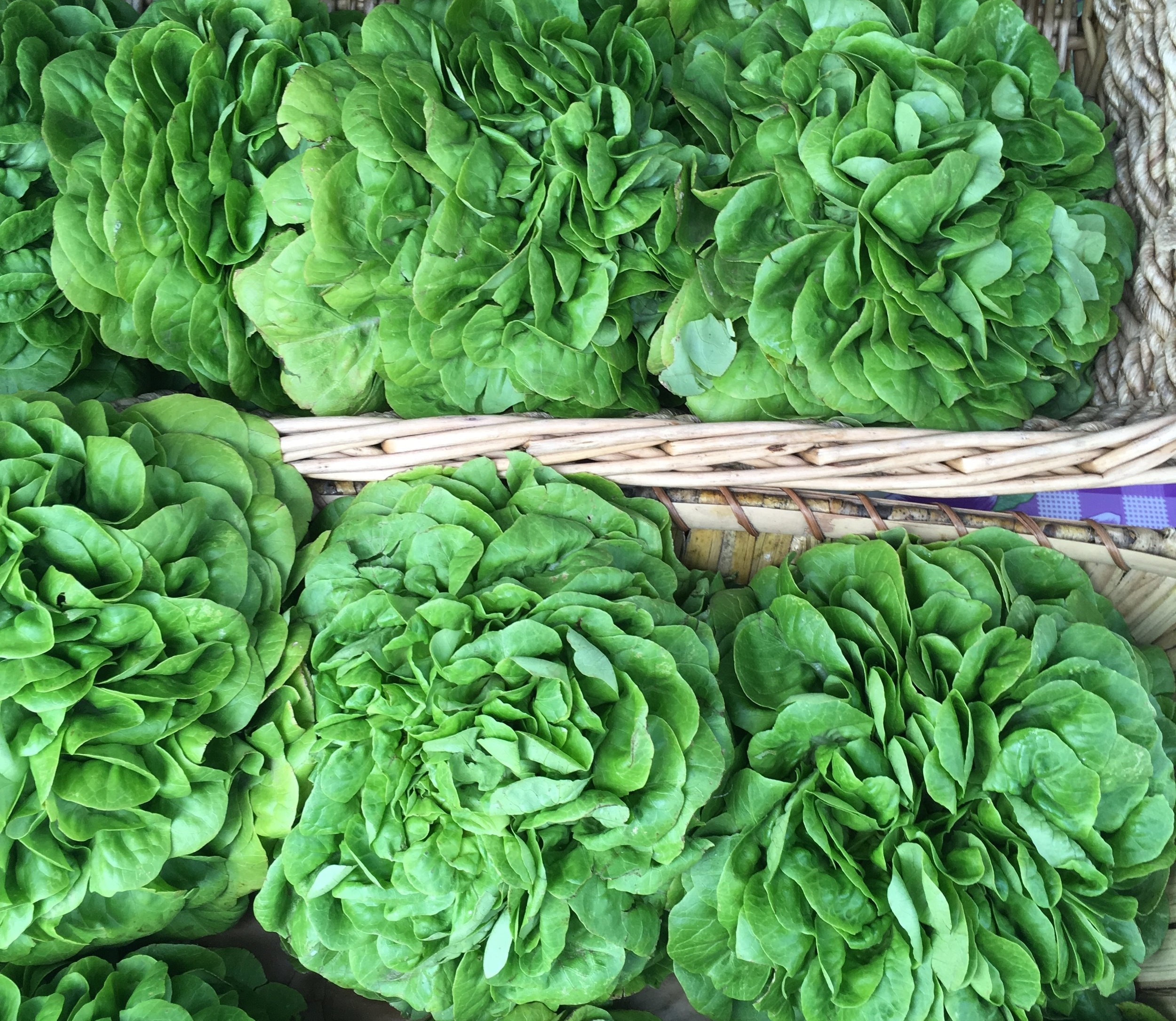 Lettuce+%2813%29.jpg