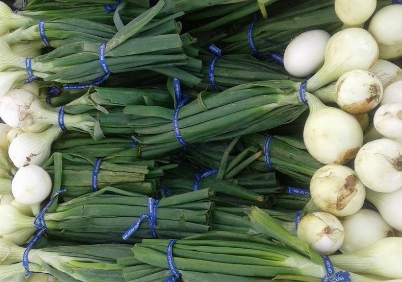 onions%2B%25282%2529.jpg