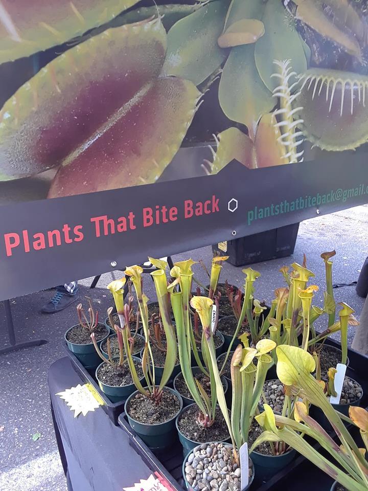 Plants (14).jpg