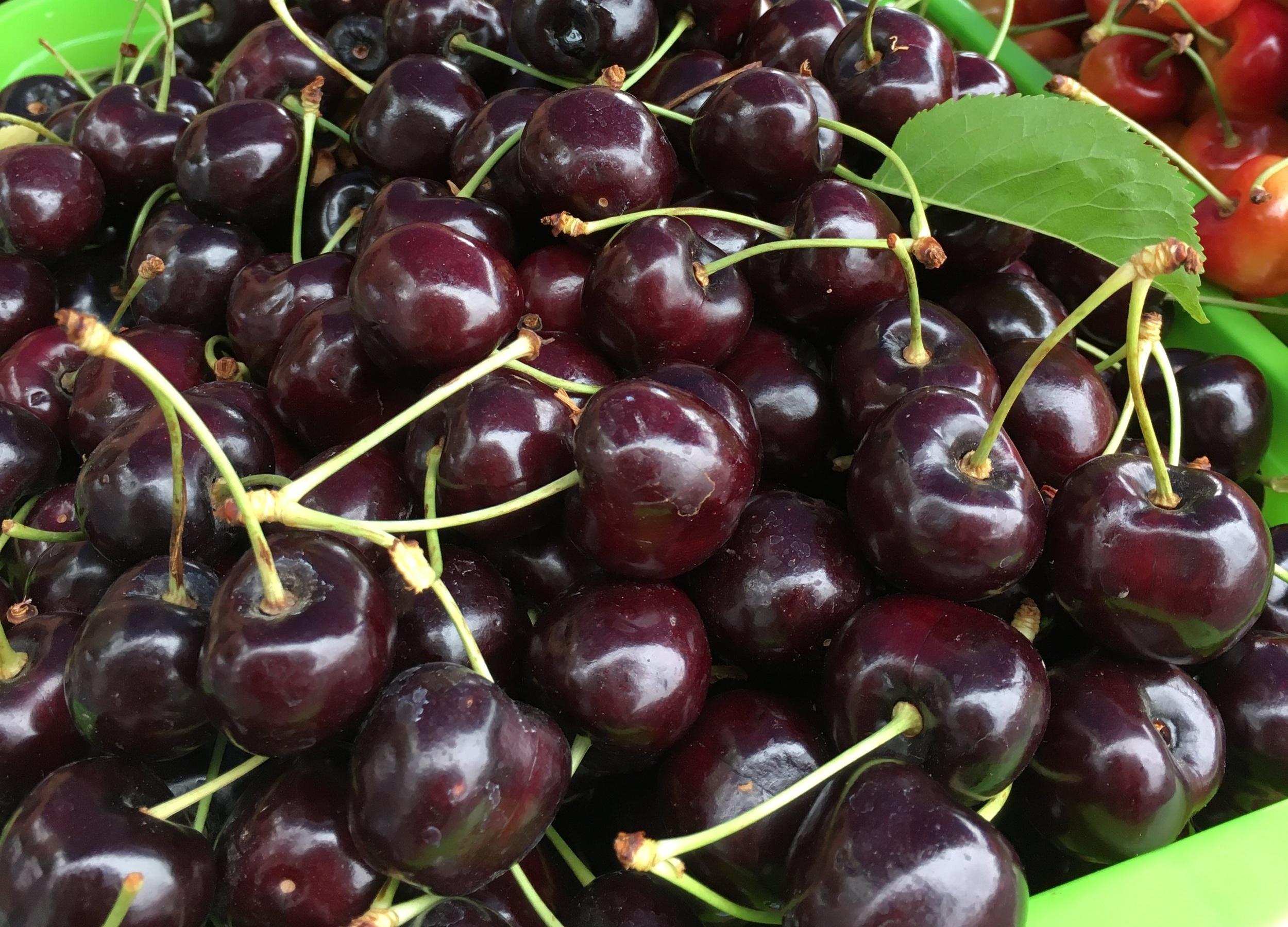 Cherries+%2811%29.jpg