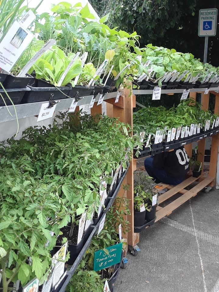 Plant Start (10).jpg