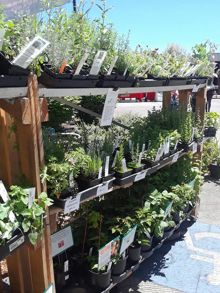 Plant Start (11).jpg